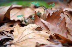 Romantiskt höstligt lynne Fotografering för Bildbyråer