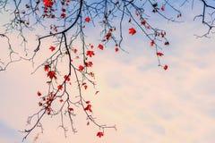 Romantiskt lynne, begrepp av nostalgi naturligt royaltyfri foto