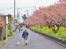 Romantyczna droga przemian piękny Czereśniowy okwitnięcie, Sakura Fotografia Stock