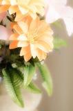 Romantyczna marzycielska i miękka ostrość kwiat Zdjęcia Royalty Free