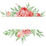 Romantyczna rama z kwiatu Karcianym szablonem Akwareli peonie z zielenią opuszczają na białym tle szczotkarski węgiel drzewny rys Obrazy Royalty Free