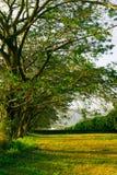 Romantyczna ziemia Zdjęcie Stock