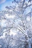 Romantyczna zima Zdjęcie Royalty Free