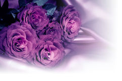romantyczne róże Fotografia Royalty Free