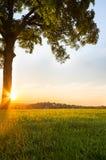 Romantyczni Sunrays Zdjęcie Royalty Free