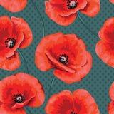 Romantyczny bezszwowy wzór z kwiatów maczkami Zdjęcia Royalty Free