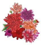 Romantyczny chryzantema kwiatu bukiet odizolowywający Zdjęcia Stock
