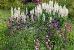 Romantyczny flowerbed w purpurowych brzmieniach Piękni kolorowi kwiaty - irys, cebulkowy dekoracyjny, aquilegia, łubiny Zdjęcie Stock