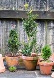 Romantyczny idylliczny roślina stół w ogródzie z starym retro kwiatu garnkiem puszkuje, wytłacza wzory, i rośliny fotografia stock