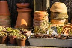Romantyczny idylliczny roślina stół w ogródzie z starymi retro kwiatu garnka garnkami, ogrodowymi narzędziami i roślinami, Fotografia Stock