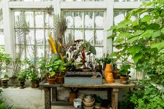 Romantyczny idylliczny roślina stół w zielonym domu z starymi retro terakotowymi kwiatów garnkami obraz royalty free