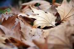 Romantyczny jesienny nastrój Zdjęcie Royalty Free
