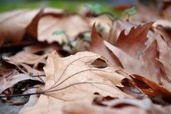 Romantyczny jesienny nastrój Zdjęcie Stock