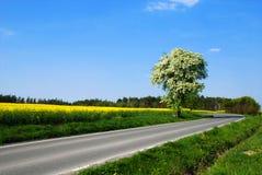Romantyczny krajobraz Zdjęcia Royalty Free