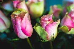 Romantyczny kwiat wzrastał Znak na miłości Lato kwiat Zdjęcie Stock