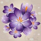 Romantyczny lily krokus Obrazy Royalty Free