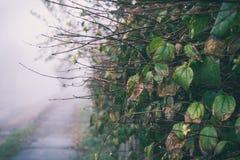 Romantyczny mgłowy i dżdżysty jesień ranek fotografia stock