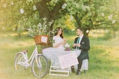 Romantyczny picknick pod drzewem w parku Szczęśliwa panna młoda pije herbaty z jej uroczym nowym mężem Dekorujący bicykl stoi bli Obraz Royalty Free