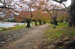 Romantyczny przejście wzdłuż spokojnej rzeki w jesieni w Japonia Zdjęcie Stock
