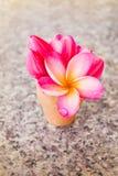 Romantyczny rocznik miłości tło dekorował z uroczym kwiatem p Fotografia Royalty Free