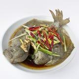 Rombo (pesce) Immagine Stock