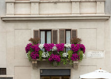 Rome. Balcony twined with flowers of petunias on facade of the house on the Piazza Navona, Rome, Italy Royalty Free Stock Photography