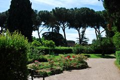 Rome city Palatino hill red rose garden Stock Images