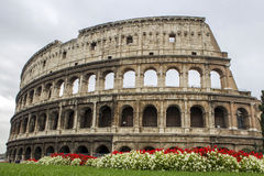 Rome Coliseum. With flowers at the bottom Royalty Free Stock Images