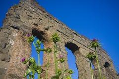 Rome: het park van aquaducten Stock Afbeelding