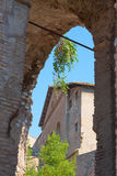Rome. Italy. The Roman forum. The Roman forum. Ruins of ancient Rome Royalty Free Stock Photo