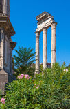 Rome. Italy. The Roman forum. The Roman forum. Ruins of ancient Rome Stock Image