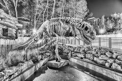 Dinosaur skeleton in amusement park at night. ROME - JANUARY 1: A dinosaur skeleton at night inside the Luneur amusement park in Rome, January 1, 2017 Stock Photo