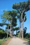 Rome, Palatine. Pine Stock Photos