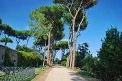 Rome, Palatine. Pine Royalty Free Stock Photos
