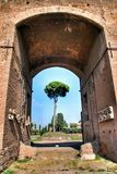 Rome, Palatine. Pine Royalty Free Stock Images