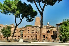 Rome, Palatine. Pine Royalty Free Stock Images