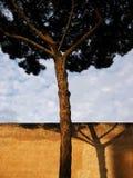 Rome pine tree Stock Images