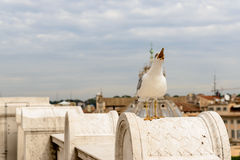 Rome Roofs with Seagull Stock Images