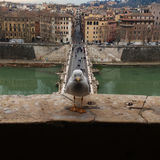 Rome seagull Royalty Free Stock Photo