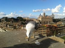 Rome, sky, city, bird, ostrich. Rome is sky, ostrich and ostrich, Struthio camelus. That marvel has city, beak and llama and that beauty contains bird, building royalty free stock images
