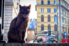 Rome svart katt Arkivfoto