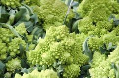 Romanesco Broccoli Royalty Free Stock Image