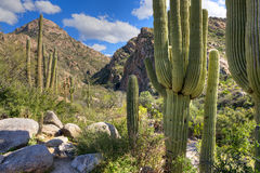 Romero Canyon Stock Photography