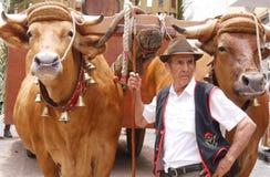 Romero con i buoi, La Orotava, Tenerife a RomerÃa de San Isidro Labrador Fotografie Stock