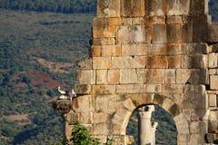 Romersk historisk plats Royaltyfria Bilder