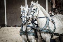 Romersk triumfvagn i en kamp av gladiatorer, blodig cirkus Royaltyfri Bild