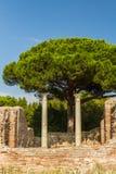 Romerska pelare på Ostia Antica Italien med stenen sörjer eller Pinusstiftet Royaltyfri Fotografi