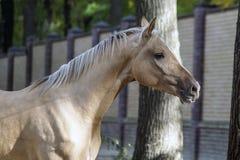 Romig paard stock foto's