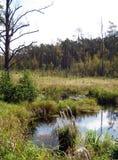 Romincka森林beautifull,波兰的狂放的部分 免版税图库摄影