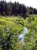 Romincka森林beautifull,波兰的狂放的部分 免版税库存图片